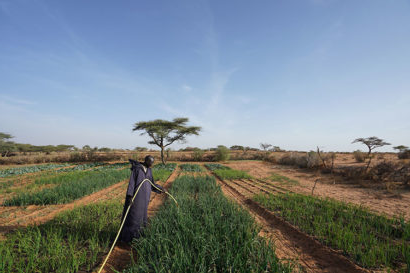 A photo of a person in black robes watering a patch of green field amidst a dry, brown landscape